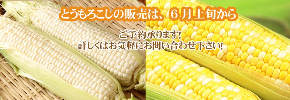 静岡 とうもろこしお米 牧之原 山本耕業